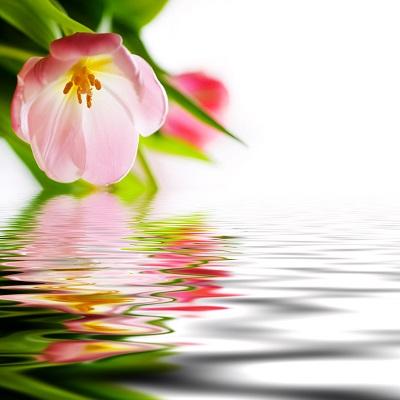 Flower Waters