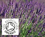 Organic Lavander, French